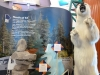 grizzly-bear-on-display-in-manitoba-tourism-building-at-the-forks-winnipeg